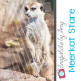Photo: Meerkat