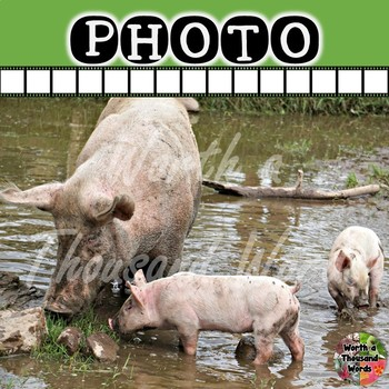 Photo: Mother and Baby Pigs in Mud