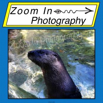 Stock Photo: Otter