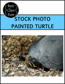 Photo Painted Turtle