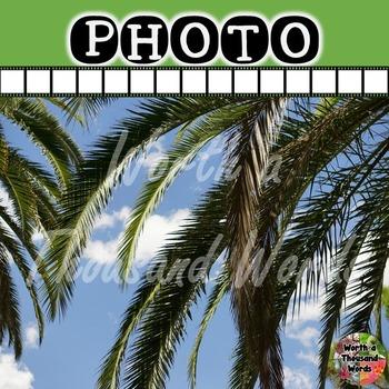 Photo: Palm Trees