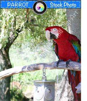 Stock Photo: Parrot
