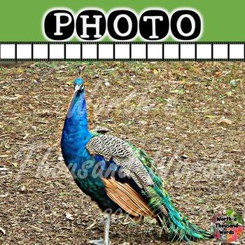 Photo: Peacock