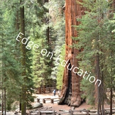 Photo/Photograph Sequoia National Park for Personal and Co