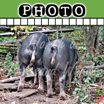 Photo: Pigs