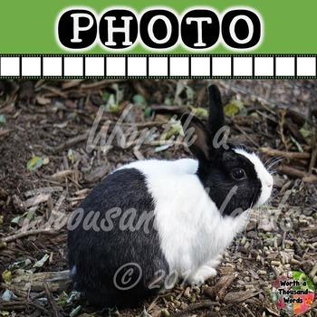 Photo: Rabbit