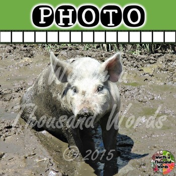 Photo: Pig in Mud