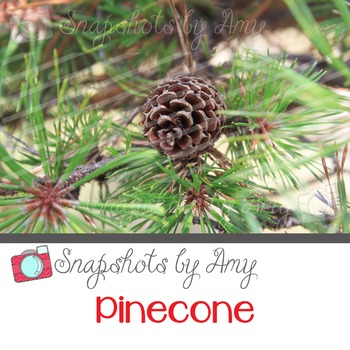 Photo: Pinecone