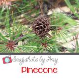 Photo: Pinecone