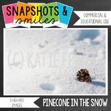 Photo: Pinecone: Snow: 3 images