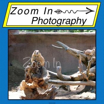 Stock Photo: Prairie Dog