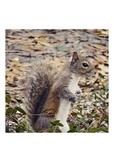 Photo Product - Squirrel