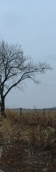 Photo Products - Bare Tree With White