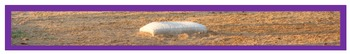Photo Products - Baseball Field With Purple Accent Theme