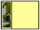 Photo Products - Bee Theme