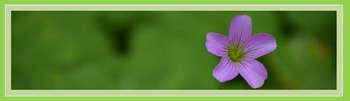Photo Products - Blooming Shamrocks With Green Theme