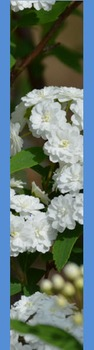 Photo Products - Bridal Wreath With Blue Theme
