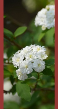 Photo Products - Bridal Wreath With Burgundy Theme