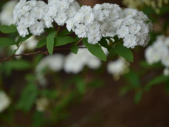 Photo Products Bridal Wreath With Green Theme