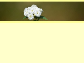 Photo Products - Bridal Wreath With Ivory Theme