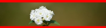 Photo Products - Bridal Wreath With Red Theme