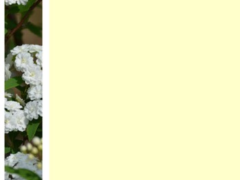 Photo Products - Bridal Wreath With White and Ivory Theme