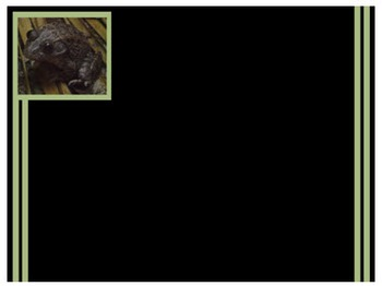 Photo Products - Frog With Black Theme