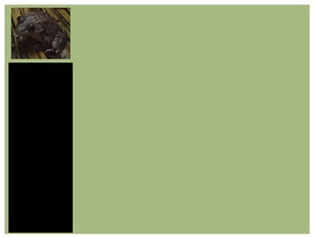 Photo Products - Frog With Green Theme