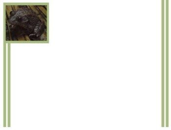 Photo Products - Frog With White Theme