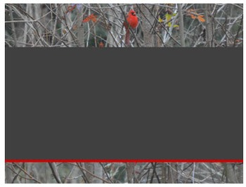Photo Products - Mr. and Mrs. Cardinal Theme