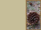 Photo Products - Pine Cone With Brown Theme