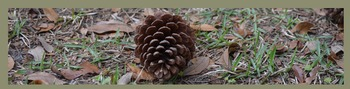 Photo Products - Pine Cone With Gray Theme