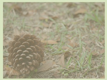 Photo Products - Pine Cone With Green Theme
