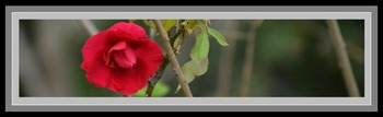 Photo Products - Rose With Gray Theme