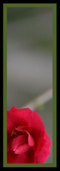 Photo Products - Rose With Green Theme