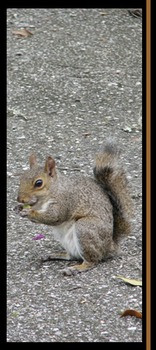 Photo Products - Squirrel With Brown Theme
