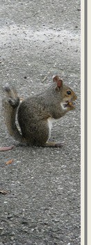 Photo Products  Squirrel With Gray Theme