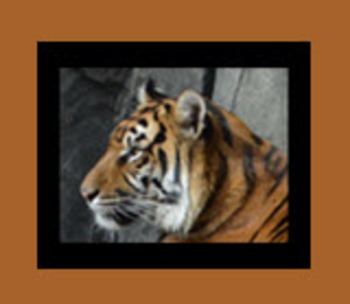 Photo Products - Tiger With Black Background Theme