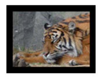 Photo Products - Tiger With White Background Theme