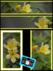 Photo Products - Yellow Trumpet Vine With Yellow Theme