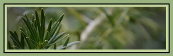 Photo Products - Yew Sprig Theme