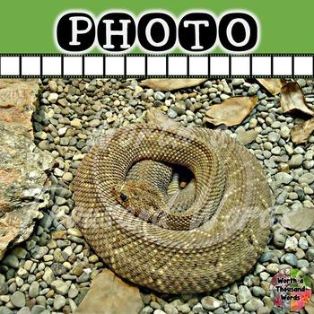 Photo: Rattlesnake
