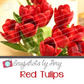 Photo: Red Tulips