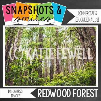 Photo: Redwood Forest: 10 High Res Images