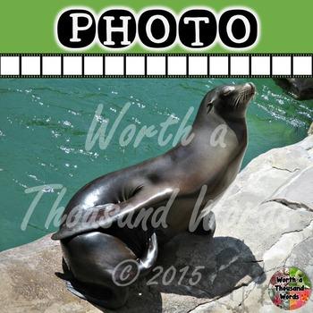 Photo: Sea Lion