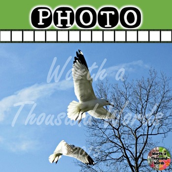 Photo: Seagulls