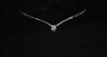 Photo Sequence : Bird in Flight