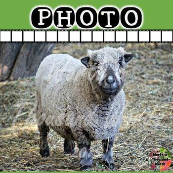 Photo: Sheep