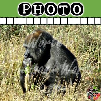 Photo: Silverback Gorilla