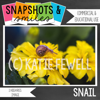 Photo: Snail: 1 High Res Image